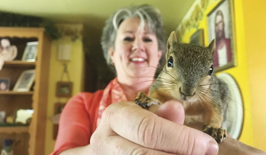 In this undated photo, Kristie Wolff holds Thor, a red squirrel she rescued. Wolff, a third-grade teacher at Washington Elementary School in Pocatello, rescued a baby American red squirrel back in August. She nurtured the little fella back to health, and it stuck around. (Josh Friesen/The Idaho State Journal via AP)
