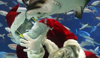 A diver dressed as Santa Claus feeds fish during the annual Christmas event at Tokyo's Sunshine International Aquarium in Tokyo, Tuesday, Dec. 6, 2016. (AP Photo/Shizuo Kambayashi)