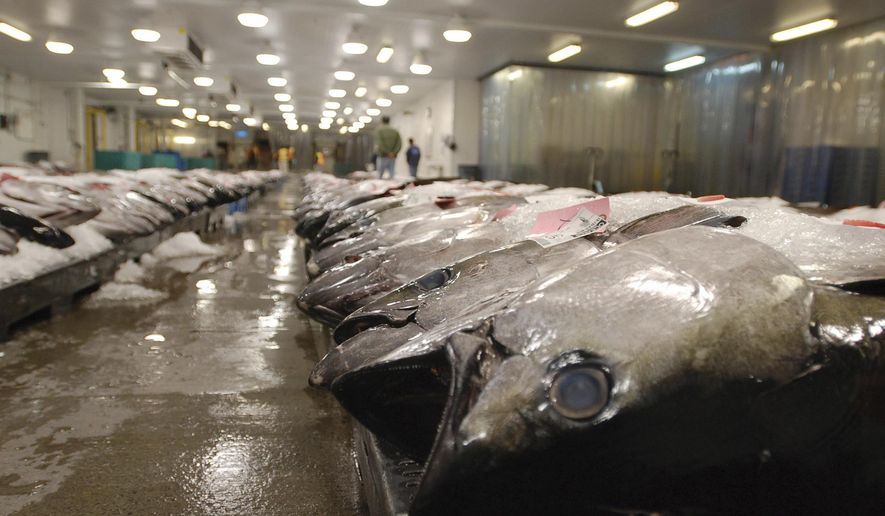 FILE - In this March 23, 2016 file photo, tuna caught by foreign fishermen aboard American boats are lined up at the Honolulu Fish Auction at Pier 38 in Honolulu. Experts and advocates are urging Congress to improve conditions for hundreds of foreign fishermen working in Hawaii's commercial fleet, following an Associated Press investigation that found the men have been confined to vessels for years without basic labor protections.  (AP Photo/Caleb Jones, File)