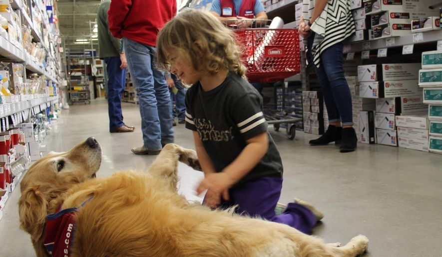 In this Nov. 22, 2016 photo, Tinley Farmer, 4, pets Charlotte, as her mother, Jessica, right, talks to Lowe's employee Clay Luthy in Abiline, Texas.  U.S. Air Force veteran Clay Luthy and his service dog golden retriever, Charlotte, both wear red and blue Lowe's vests to work at the home improvement retailer. (Greg Jaklewicz/The Abilene Reporter-News via AP)