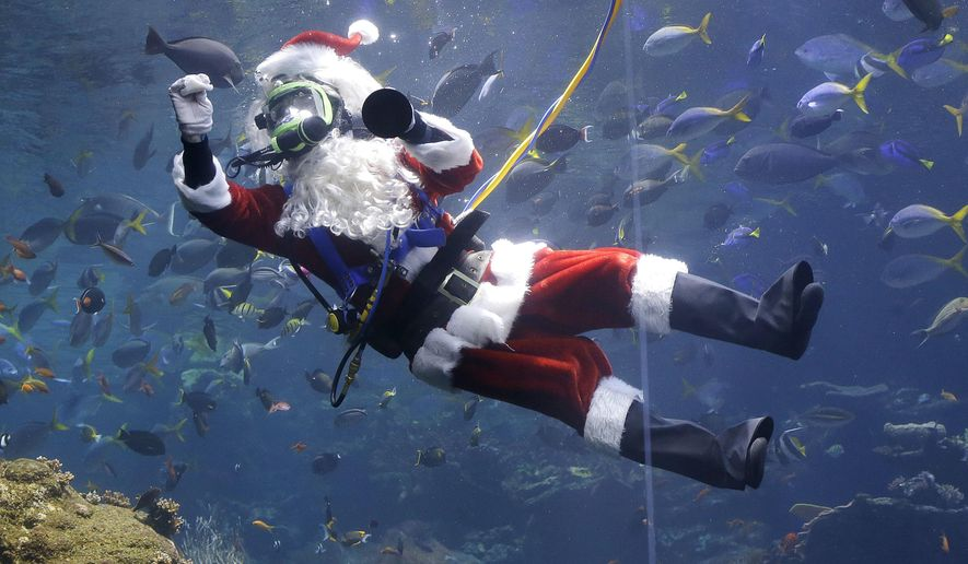 Volunteer diver George Bell, dressed as Santa Claus, swims in the Philippine coral reef tank before giving a presentation as part of the 'Tis the Season for Science holiday exhibit at the California Academy of Sciences in San Francisco, Thursday, Dec. 15, 2016. (AP Photo/Jeff Chiu)