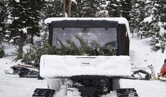 In this Dec. 11, 2016 photo, a freshly cut pine tree sits in the back of a snowcat near Bondurant, Wyo. Police chief invites friends and family to cut conifers to make his cabin fire-safe. The Jackson Hole News and Guide reports the trees need to be felled to create a defensible space around the building in case of wildfire. (Rugile Kaladyte/The Times-News via AP)