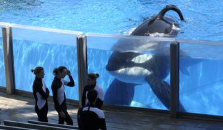 FILE- In this March 7, 2011 file photo orca whale Tilikum, right, watches as SeaWorld Orlando trainers take a break during a training session at the theme park's Shamu Stadium in Orlando, Fla. Tilikum, an orca that killed a trainer at SeaWorld Orlando in 2010, has died. According to SeaWorld, the whale died Friday, Dec. 30. 2016. (AP Photo/Phelan M. Ebenhack, File)