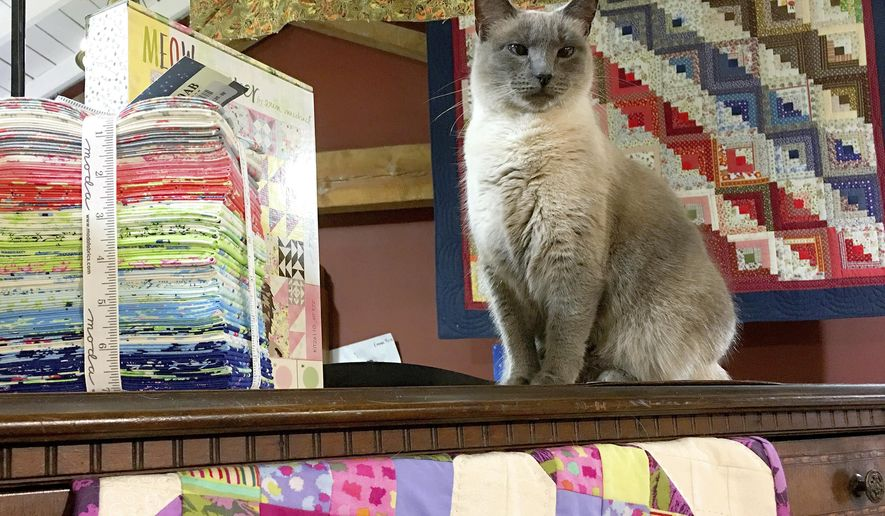 Sweet Blue enjoys her perch on top of a cabinet at Rachel's Quilt Patch in Staunton, Va., on Dec. 30, 2016.  Shop owner Rachel Brown decided to make the new kitten a part of the store. She named her Sweet Blue for her piercing blue eyes and let her live in the store.   (Mike Tripp/The Daily News Leader via AP)
