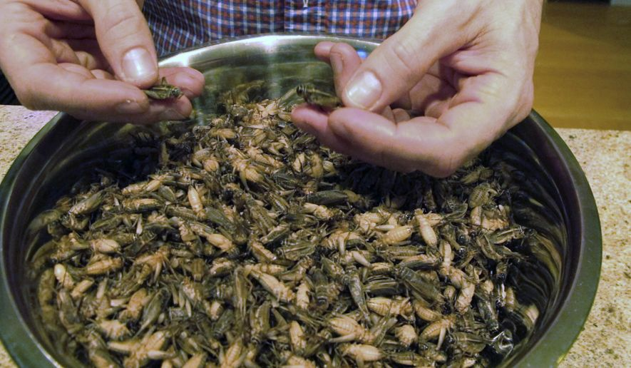 In this Nov. 30, 2016, photo, Stephen Swanson shows a bowl of frozen crickets at Tomorrow's Harvest cricket farm in Williston, Vt. Farmers are raising the alternative livestock they claim is more ecologically sound than meat, but is sure to bug some people out: crickets. (AP Photo/Lisa Rathke)