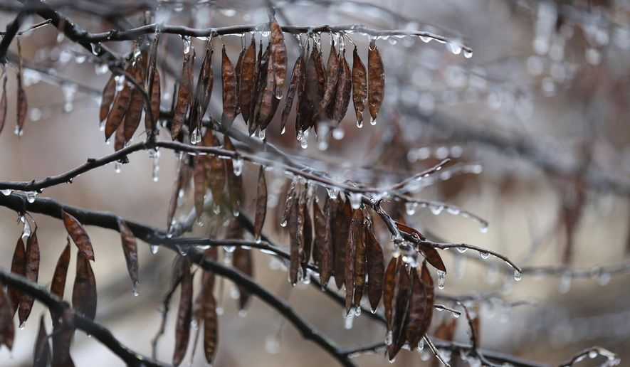 Icicles hang from a branch of a tree in Tulsa, Saturday Jan. 14, 2017.  (Jessie Wardarski/Tulsa World via AP)