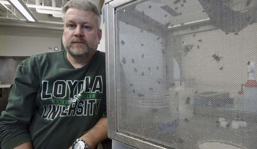 In this Dec. 27, 2016 photo, David Rivers, Ph.D., Loyola University biology department chair, poses in Baltimore, Md. Rivers and his students are researching on how to help law enforcement to identify real blood stains from fly contaminants at crime scene. (Kenneth K. Lam/The Baltimore Sun via AP)