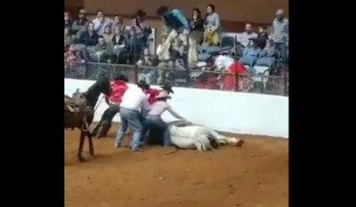 The People for the Ethical Treatment of Animals (PETA) are calling for a boycott against rodeos after two horses died during competitions this month in Fort Worth, Texas. 9-year-old Treasure of Patience, pictured here, died Sunday night at the Fort Worth Stock Show & Rodeo after running into a wall and suffering a spinal cord injury. (Facebook/@Bruce Weidner)