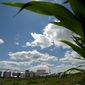 Veterans make up about 19 percent of the corn ethanol workforce, according to federal Energy Department figures — the largest percentage of veterans in any energy subsector of the U.S. economy. (Associated Press/File)