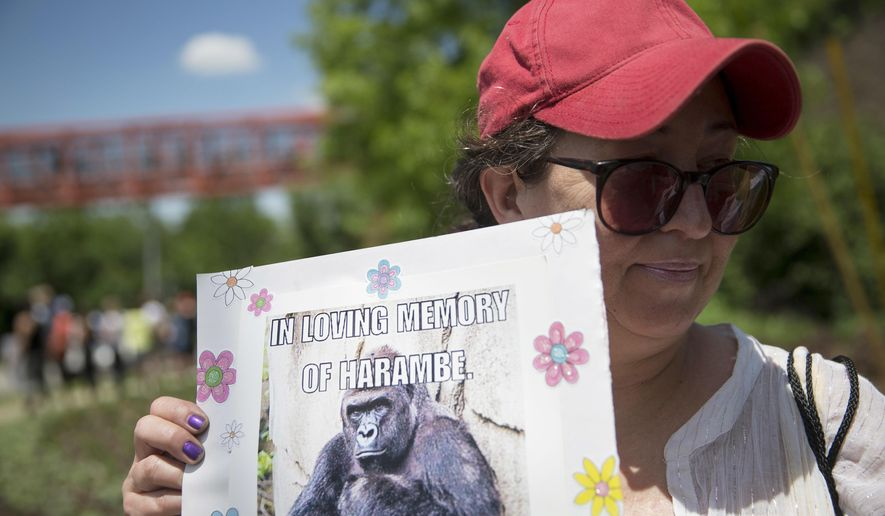 FILE - In this May 30, 2016, file photo, Alesia Buttrey, of Cincinnati, holds a sign with a picture of the gorilla Harambe during a vigil in his honor outside the Cincinnati Zoo & Botanical Garden, in Cincinnati. A Cheeto that bears a resemblence to the slain gorilla sold for nearly $100,000 on eBay Tuesday, Feb. 7, 2017. (AP Photo/John Minchillo, File)
