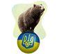 2_8_2017_b1-yash-bear-ukrain8201.jpg