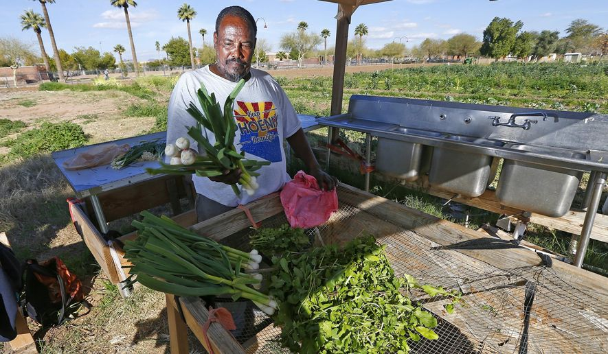 In this Tuesday, Feb. 7, 2017 photo, Tareke Tekie, originally from Eritrea, washes freshly picked items from his garden at a 15-acre lot of public gardens in Phoenix. The sprawling urban garden on a vacant lot where Phoenix residents have grown everything from melons to okra closed Friday, Feb. 10 after the gardeners were mysteriously ordered out as a federal agency reassumes ownership of the land, stupefying and angering gardeners who called their eviction a classic case of government dysfunction. (AP Photo/Ross D. Franklin)