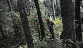 FILE - In this Oct. 27, 2016, file photo, Joe Metzler walks across a fallen log over a creek in the Silver Grove surrounded by some trees in the grove that are over 220 years old in Elliott State Forest near Reedsport, Ore. Two members of the state land board voted in Salem, Ore., Tuesday, Feb. 14, 2017, to sell Oregon's oldest state forest, while a third member, Gov. Kate Brown, insisted it remain in public hands. (Amanda Loman/The World via AP, File)