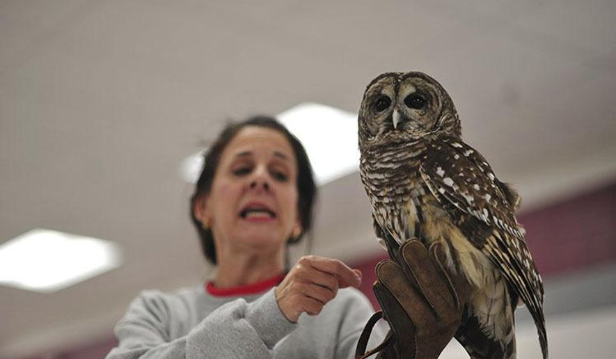 In this Tuesday, Feb. 14, 2017 photo, Allen holds up a Barred owl for an assembly at Pembroke Elementary School, in Pembroke, Ky. (Meredith Willse /Kentucky New Era via AP)