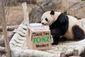 2_212017_panda-28201.jpg