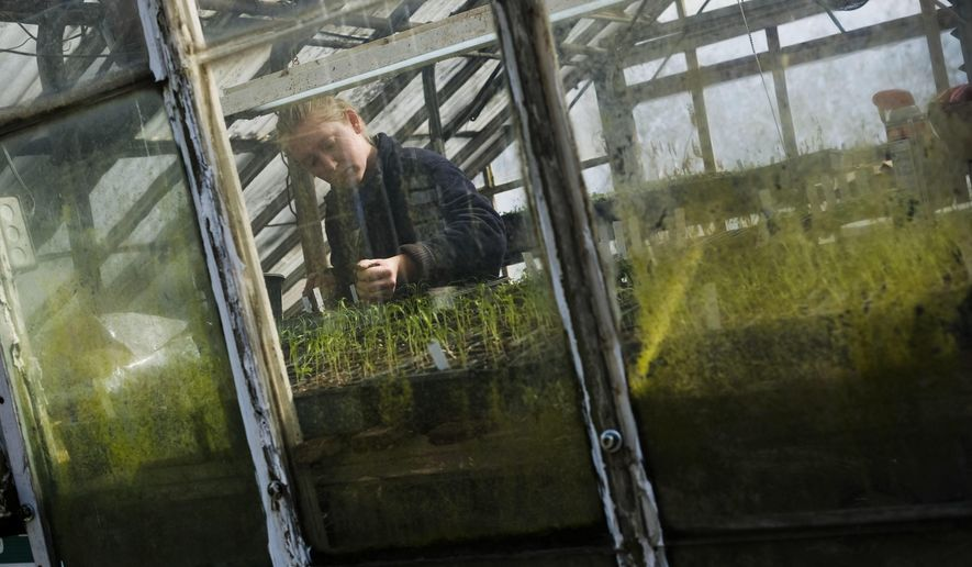In this Monday, Feb. 13, 2017 photo, Tessa Sarver works in the farm greenhouse preparing crops for the spring growing season and summer harvest at Sarver Hill Farms in Greensburg, Pa. (Christian Tyler Randolph /Pittsburgh Tribune-Review via AP)