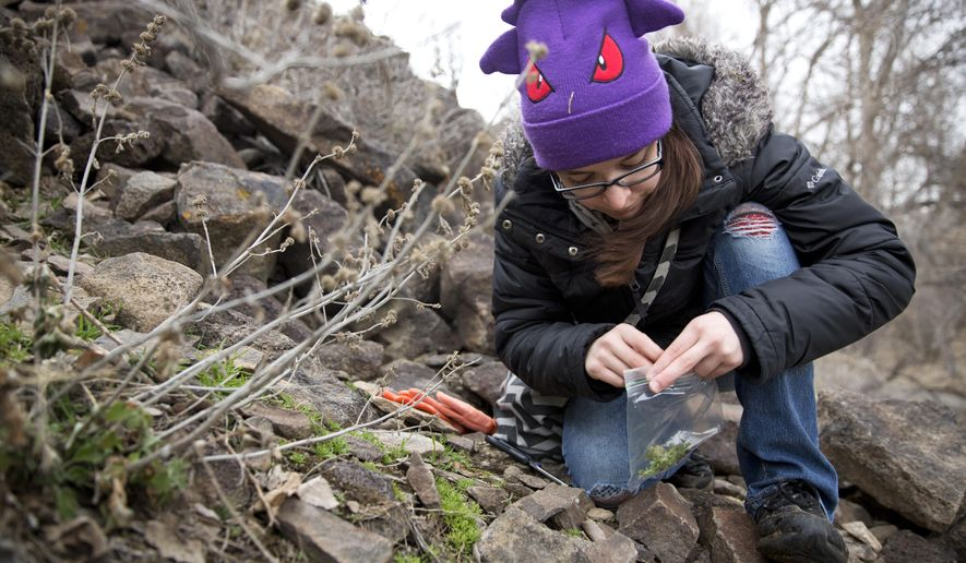 In this Saturday, Feb. 18, 2017 photo, Rachel Arreguin, 23, collects a sample of moss for wildcrafting at Rock Creek Park in Twin Falls, Idaho. Walking alongside her were six other members of the Magic Valley Pagans. Pagans, atheists and humanists form social groups to reach like-minded individuals.  (Pat Sutphin/The Times-News via AP)