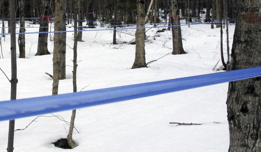 In this Feb. 21, 2017 photo, tubing carries sap collected from maple trees at the University of Vermont's Proctor Maple Research Center in Underhill, Vt. The center is using a new machine that removes more water from sap than older technology, saving maple syrup producers time and energy boiling sap into syrup. (AP Photo/Lisa Rathke)