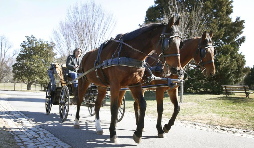 ADVANCE FOR MONDAY, MARCH 6, 2017  - In this Friday, Feb. 17, 2017 photo, Solo and Artie, Maymont's carriage horses pose for photos as they walk around the grounds driven by Armistead Wellford, Maymont's carriage manager in Richmond, Va. (Shelby Lum/Richmond Times-Dispatch via AP)