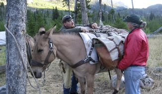 "In this August 2011 photo provided by Traute Perry, Nolan Melin, left , loads one of his five mules with gear on the Stillwater Trail in the Absaroka-Beartooth Wilderness. Blowing up dead animals was ""just part of the deal"" in the 16 seasons Melin worked as a backcountry horse packer and trail crew member for the Forest Service. ""You've got to get rid of them,"" he said matter-of-factly about a pretty unusual occurrence. Otherwise, a dead horse or mule might attract bears to a wilderness trail, which is dangerous for humans and the bears. (Traute Perry via AP)"