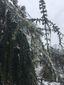 3_142017_snow-shelter-image58201.jpg