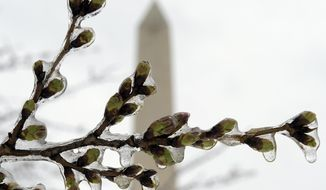 Washington's famed cherry blossoms are covered in ice during a late winter storm in Washington, Tuesday, March 14, 2017, looking toward the Washington Monument. The National Park Service is concerned about the impact of cold weather on the blossoms. (AP Photo/Susan Walsh)