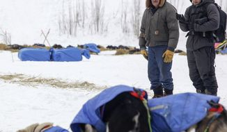 In this March 11, 2017, photo, long-time sprint musher Benedict Jones, left, looks over an Iditarod team in Koyukuk, Alaska. The whole village of Koyukuk was abuzz with excitement as team after team of the Iditarod Trail Sled Dog Race pulled through the community, but perhaps none were more excited than 83-year-old Jones, one of the last living dog mushers in the community. (Matt Buxton /Fairbanks Daily News-Miner via AP)
