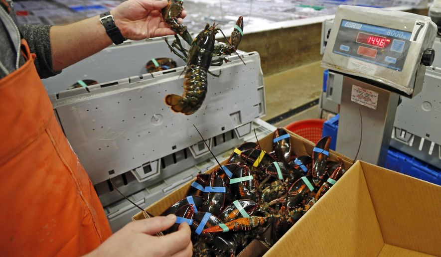 FILE - In this Thursday, Dec. 10, 2015, file photo, live lobsters are packed and weighed for overseas shipment at the Maine Lobster Outlet in York, Maine. The expanding market for lobsters in China is continuing to grow, with the country setting a new record for the value of its imports of the crustaceans from the United States. (AP Photo/Robert F. Bukaty, File)