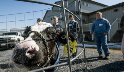 ADVANCE FOR MONDAY, MARCH 27, 2017 - In this Saturday, March 18, 2017 photo, children participating in the Progressive Agriculture Farm Safety Day at Hickory Hollow School learn about large animal safety in Dayton, Va.  (Daniel Lin /Daily News-Record via AP)
