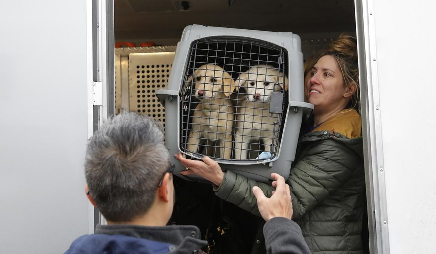 A crate holding two puppies rescued from a South Korean dog meat farm are loaded onto an animal transport vehicle near Kennedy Airport by Animal Haven Director of Operations Mantat Wong, left, and volunteer Nicole Smith Sunday, March 26, 2017, in the Queens borough of New York. The Humane Society International is responsible for saving 46 dogs that would otherwise have been slaughtered. Humane Society officials said the dogs that arrived in New York late Saturday night had awaited death in dirty, dark cages, and were fed barely enough to survive at a farm in Goyang, South Korea. (Andrew Kelly/Humane Society International via AP)