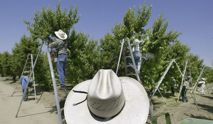 "In this May 13, 2004, file photo, a foreman watches workers pick fruit in an orchard in Arvin, Calif. On May 2, 2004, a number of workers fell ill after pesticides sprayed over an adjacent orchard drifted a quarter-mile and sickened the pickers. The Trump administration won't ban a common pesticide used on food, reversing efforts by the Obama administration to bar the chemical based on findings it could hinder development of children's brains. In announcing the decision late Wednesday, March 29, 2017, Environmental Protection Agency Administrator Scott Pruitt said that by not banning chlorpyrifos, he was providing ""regulatory certainty"" to thousands of American farmers that rely on the pesticide. (AP Photo/Damian Dovarganes, File)"