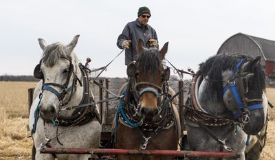 In a March 29, 2017 photo, Jason Julian, a sub-contractor for US Cellular, prepares his team of horses to transport supplies to a US Cellular phone tower through muddy, uneven terrain in Portage County, Wis. Old and new technology are merging in rural Wisconsin, as U.S. Cellular is using draft horses to help install cellphone equipment.  (Tyler Rickenbach/The Post-Crescent via AP)