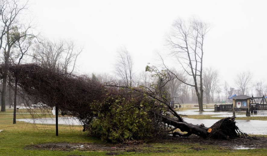 A tree lies fallen at the Bay City State Park in Bangor Township, Mich., on Thursday, April 6, 2017. A mix of snow and rain across much of Michigan is causing hazardous driving conditions and bringing the threat of flooding in places. (Jacob Hamilton /The Bay City Times via AP)