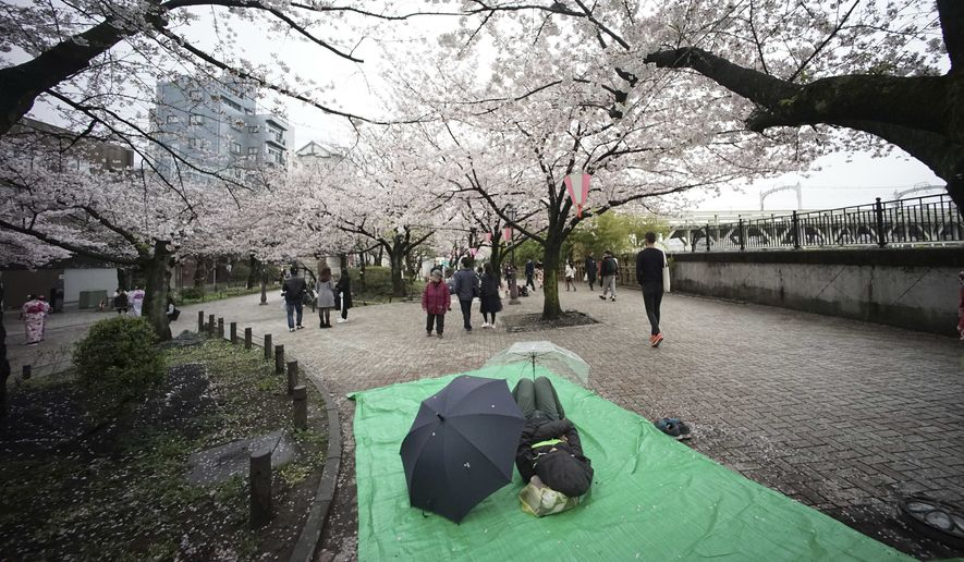 A man sleeps under the cherry blossoms in full bloom in Tokyo, Saturday, April 8, 2017. The cherry blossom season marks the arrival of spring for the Japanese. (AP Photo/Eugene Hoshiko)
