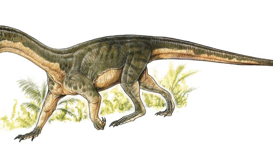 This artist's rendering provided by Gabriel Lio in April 2017 shows the Teleocrater rhadinus, a four-legged, meat-eating reptile and a close relative of dinosaurs. Researchers who found its fossils in Tanzania in 2015 describe it in a paper released Wednesday, April 12, 2017 by the journal Nature. (Gabriel Lio/Museo Argentino de Ciencias Naturales, Buenos Aires via AP)