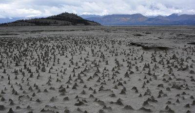 "In this photo provided by Jim Best/University of Illinois, taken in 2016, sections of the newly exposed, once under water, bed of Kluane Lake contain small pinnacles. Wind has eroded sediments with a harder layer on top that forms a protective cap as the wind erodes softer and sandier sediment below. These pinnacles, just a few centimeters high, are small-scale versions of what are sometimes termed ""hoodoos.""  (Jim Best/University of Illinois via AP)"