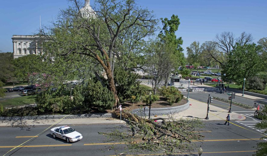 Police block off a section of a street after part of a tree fell and injured a man on the U.S. Capitol grounds in Washington, on Tuesday, April 18, 2017. (Linda Davidson/The Washington Post via AP)