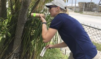 In this photo made available by the Florida Keys Mosquito Control District, research entomologist Catherine Pruszynski releases male mosquitos in Key West, Fla., testing a new way to kill mosquitoes that carry Zika and other viruses Tuesday, April 18, 2017. The mosquitos bred by a Kentucky-based company are infected with the naturally occurring Wolbachia bacteria. When the lab-bred mosquitoes mate with wild female mosquitoes the offspring don't survive adulthood. (Beth Ranson/Florida Keys Mosquito Control District via AP)
