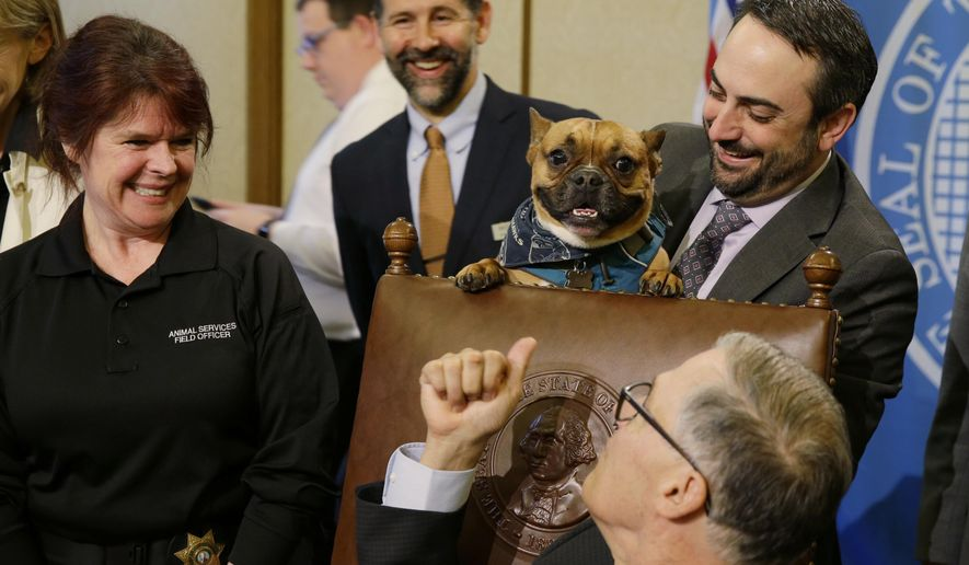 """Sen. Guy Palumbo, D-Maltby, right, holds Smudge, a French bulldog, as Washington Gov. Jay Inslee, lower right, looks on before signing a bill, Wednesday, April 19, 2017, at the Capitol in Olympia, Wash., that brings new penalties for dog owners who tie up or """"tether"""" their dogs in an inhumane way. (AP Photo/Ted S. Warren)"""