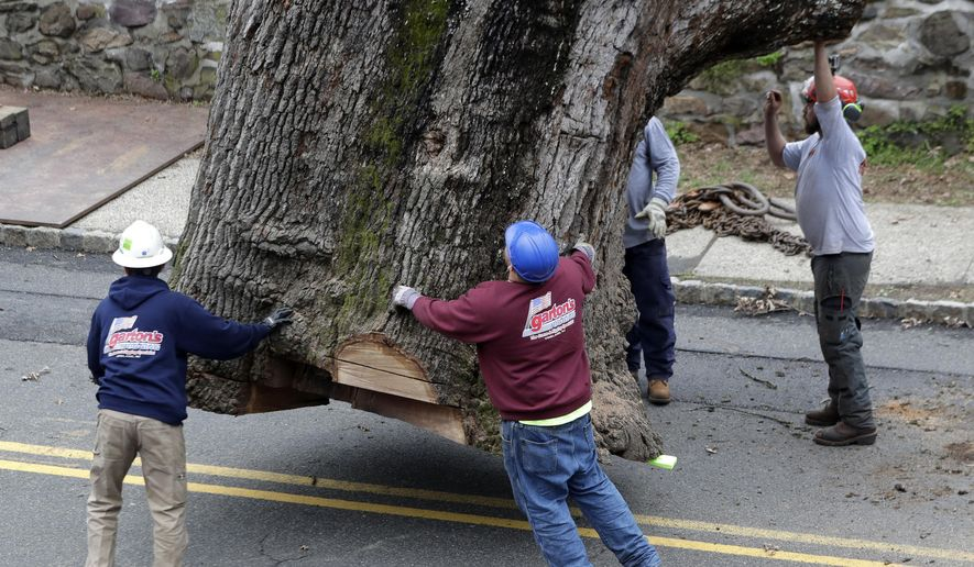 Crews guide the trunk of a 600 year old oak tree as it is moved by a crane during its removal, Wednesday, April 26, 2017, in Bernards, N.J. Crews completed taking down a 600-year-old white oak tree that's believed to be among the oldest in the nation after work was halted because of bad weather. (AP Photo/Julio Cortez)