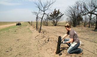 FILE - In this March 22, 2017 file photo, Kansas State student Reagan Butler and others from a Manhattan youth group help remove damaged fencing over thousands of acres in fire-ravaged Clark County, Ark. The Western mountains are flush with snow and California has canceled its drought emergency, but some farmers and ranchers on the high plains are struggling amid a lengthy dry spell and the aftermath of destructive wildfires.  (Michael Pearce/The Wichita Eagle via AP, File)
