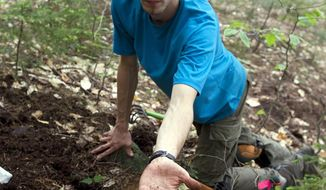In this 2014 photo provided by the University of New Hampshire, doctoral student Ryan Stephens finds a truffle in the Bartlett Experimental Forest in the White Mountain National Forest in New Hampshire.  Researchers at the New Hampshire Agricultural Experiment Station at UNH identified and described five new truffle species that while not the type prized by the culinary world, are important to forest health.  (University of New Hampshire via AP)