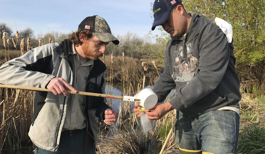 In this April 19, 2017 photo, Canyon County Mosquito Abatement larvicide technician Scott Arbon and Jaron Lakey collect a sample of mosquito larvae at Deer Flat Wildlife Refuge near Lake Lowell near Nampa, Idaho. Due to flooding from the Boise River that have left pools of standing water, many tracts of the county have become prime habitat for mosquito larvae, and larvicide technicians like Arbon and Lakey are canvassing the county in hopes of keeping a looming mosquito threat at bay. (Ryan Thorne/The Idaho Press-Tribune via AP)