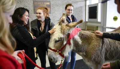 In this Tuesday, May 2, 2017 photo, Stephanie Barnette and her certified therapy donkey, Oliver, visit students to help relieve final exam stress in the foyer of Renne Library on Montana State University campus in Bozeman, Mont. (Rachel Leathe/Bozeman Daily Chronicle via AP)