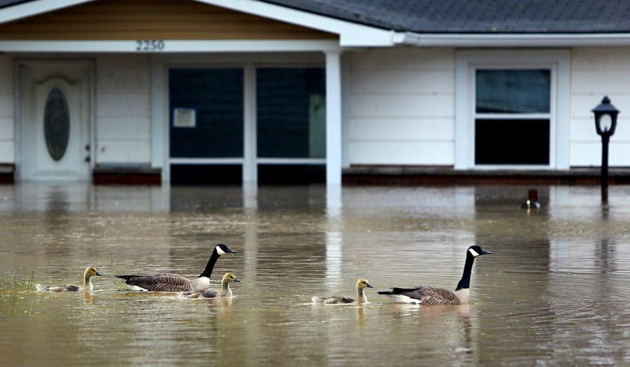 Geese swim through floodwater from the Meramec River on Electra Drive in Arnold, Mo., on Thursday, May 4, 2017. The floodwater has slowly started to recede.    Heavy rain last weekend created a flooding mess in Missouri, Arkansas and neighboring states, and several inches of mid-week rain have helped keep the water high.  (David Carson/St. Louis Post-Dispatch via AP)