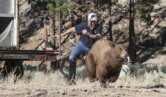 In this Aug. 9, 2013 photo provided by the Nevada Department of Wildlife, Carl Lackey, a long-time Nevada Department of Wildlife biologist, and a dog named ''Rooster'' chase after a California black bear after it was captured and re-released to the wild in the Carson Range southwest of Carson City, Nevada. Lackey has filed a defamation suit against bear protection advocates at Lake Tahoe he accuses of harassing and threatening him through a ''vicious and calculated'' social media campaign. (John Axtell/Nevada Department of Wildlife via AP)