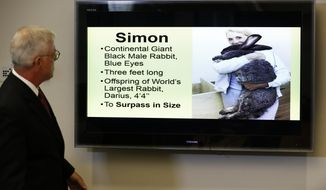Attorney Guy Cook looks at a photo of Simon, a giant rabbit that died after flying from the United Kingdom to Chicago, during a news conference, Monday, May 8, 2017, in Des Moines, Iowa. The owners of the rabbit want to know more about the animal's death and an explanation of why he was so quickly cremated. (AP Photo/Charlie Neibergall)