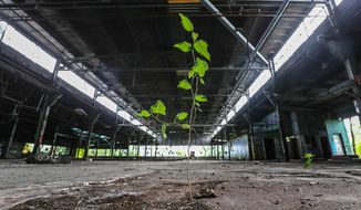 In this Monday, May 8, 2017 photo, several weeds grow inside one of nearly two dozen buildings, on the 29-acre property, known by regulators as the Black Leaf site for a tobacco-based pesticide once made there, in Louisville, Ky. The property is scheduled for a foreclosure sale on Friday. (Michael Clevenger/The Courier-Journal via AP)