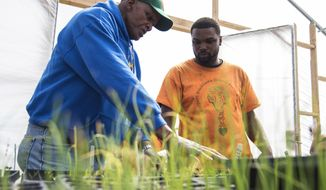 In this April 24, 2017 photo, founder and CEO of Growing Power, Will Allen, left, shows  Yatte Moore, farm manager of Blackhawk Courts Farms and Garden, in Rockford, Ill., how to maintain moisture levels in seed beds. Allen, a former professional basketball player, founded Growing Power Inc., and is a pioneer of urban agriculture in America. Moore is among those that found inspiration, and has been tending to an urban farm in a public housing complex in southeast Rockford for almost five years. (Kayli Plotner/Rockford Register Star via AP)