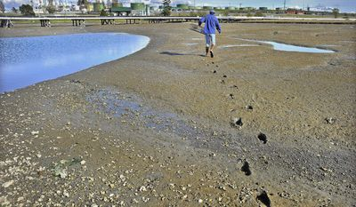 ADVANCE FOR WEEKEND EDITIONS - In this April 28, 2017, photo, Salish Sea Stewards volunteer Tom Flanagan ventures out into the mud at low tide in Fidalgo Bay to set a trap in order to monitor for green crabs in Anacortes, Wash. (Scott Terrell/Skagit Valley Herald via AP)